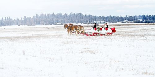 RockingKRanchGallery SleighHorseDrawnCarriageRideSnowWedding